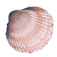 shell png-06-06